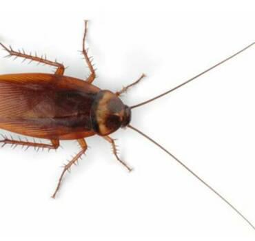 General Pest